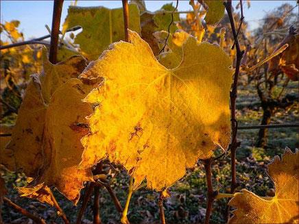 Le Coulongeais Vin de Pays Charentais Horaires d'ouverture