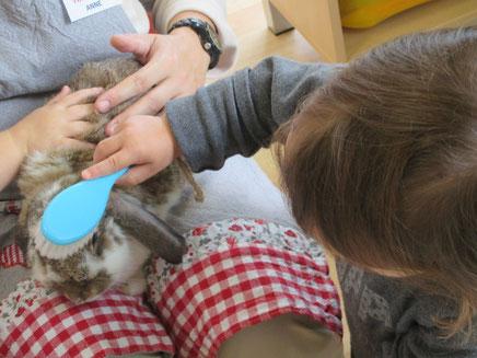 Atelier sensoriel de médiation animale proposé au sein d'un multi accueil