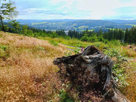 Im Herzen von Sauerland und Siegen-Wittgenstein liegt unser Naturparadies