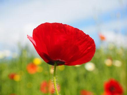 La couleur rouge: Qui est de la couleur du sang, du rubis, du coquelicot. Cette couleur chaude, flamboyante et rutilante ne laisse pas indifférent. Elle est souvent associée à la passion, à la provocation, au feu, au sang, à la violence, à la guerre,