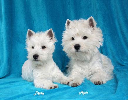 Laycy und Ayla