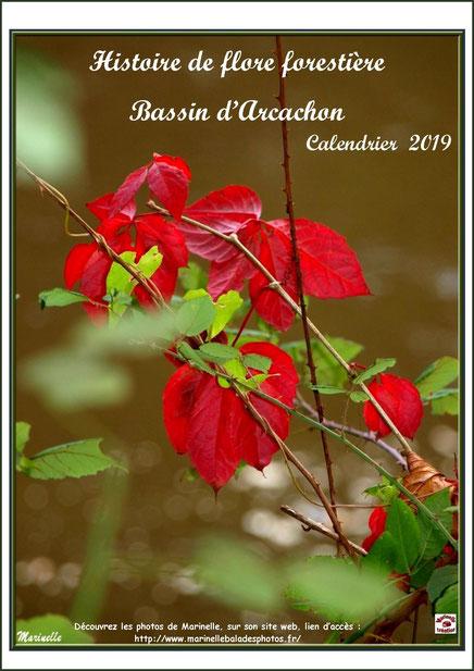 """Couverture """"Calendrier 2019 - Histoire de flore forestière, Bassin d'Arcachon"""""""