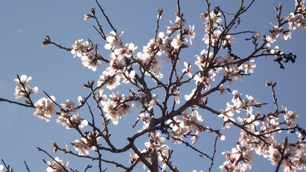 La fiesta de la Entrada de la Flor se celebra en Torrente /Valencia) con la llegada de la primavera.