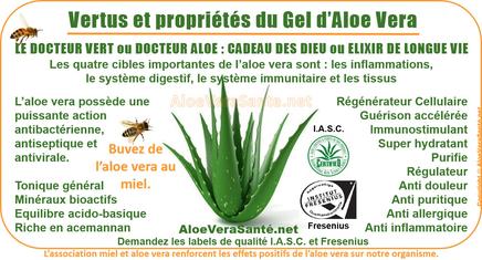 AloeVeraSante | le gel d'Aloe Vera en usage interne : anti-inflammatoire, antiseptique, hémostatique, antalgique, apaisant, immunisant, antibiotique, antiallergique etc