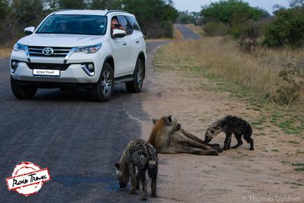 Road Trip im Kruger Nationalpark / Tüpfelhyänen