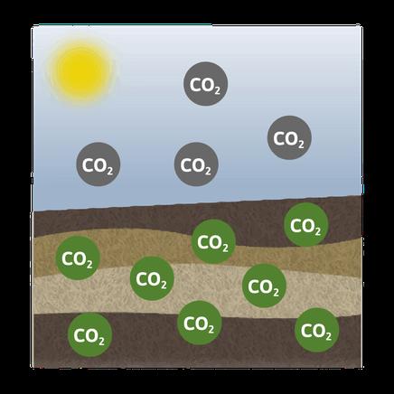 Unsere Böden sind somit äußerst potente Kohlenstoffspeicher. Kompost verbessert die Humusqualität und damit die Fähigkeit der Böden, mehr CO2 zu speichern. Das Tütle hilft mit, in dem es den Biomüll sauber und hygienisch sammelt.