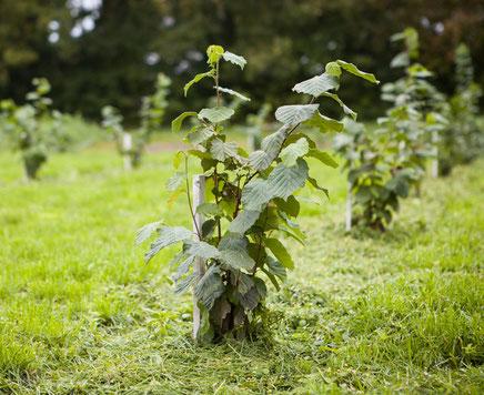 Trüffelplantage - Trüffelanbau - Tipps bis zur ersten Ernte