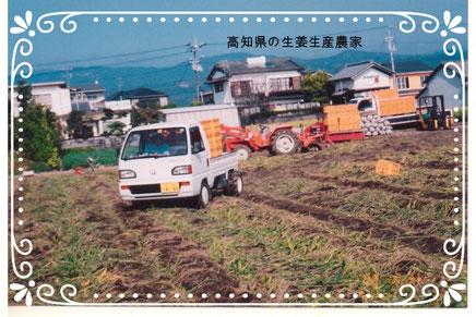 【楽輪】品番001番 生姜の収穫搬出
