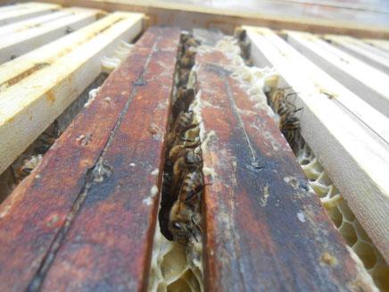 Bienen aus der Nähe