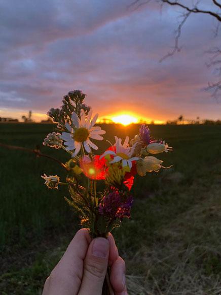 Irinas selbstgepflückter Blumenstrauss