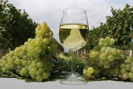 Грузинское вино «Чхавери»