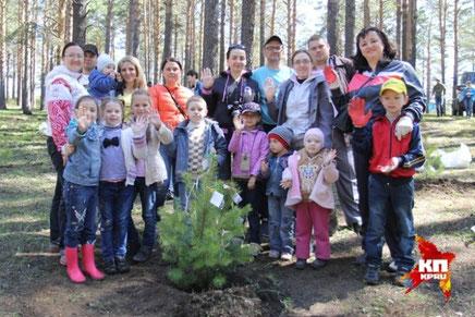 Полторы тысячи деревьев посадили иркутяне в Кайской роще  Фото: Юлия ПЫХАЛОВА