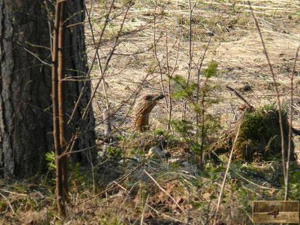 menschundnatur-unserezukunft, Tiere des Nordens, Start-Natur