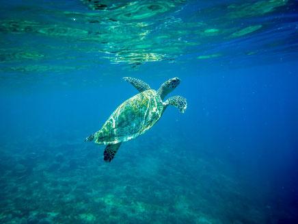 Snorkelen met schildpadden bij de Gili eilanden