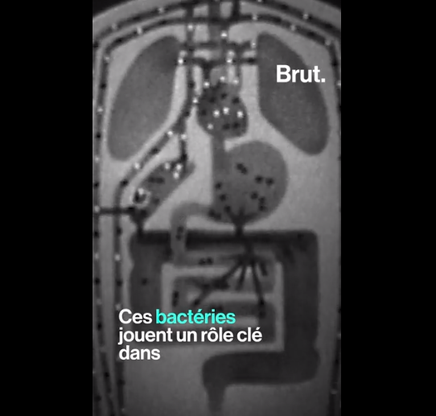 bactéries qui nous composent