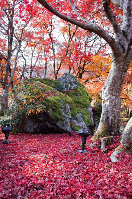 嵐山・宝厳院の紅葉