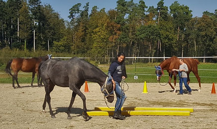 Team-Coaching mit Pferden_horse-feedback.ch