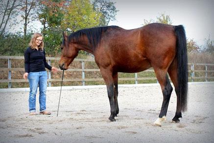 Horsemanship-Training, Kommunikation, Verbindung mit Pferd mit Spaß und Vertrauen