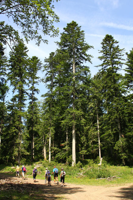 Forêt de Miayra - Randonnée Pyrénées Audoises