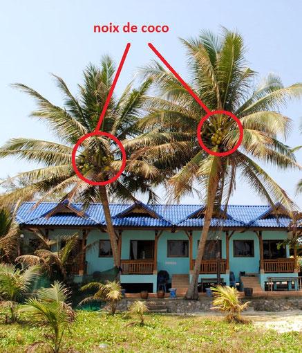 La noix de coco site de cartablesdumonde for Quand ramasser les noix