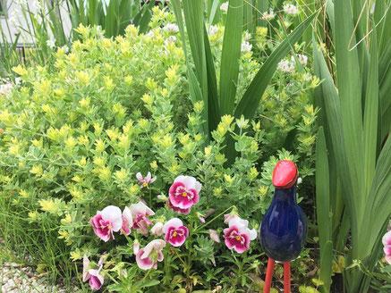 デザイナーさんのお宅の庭先。とても綺麗なお花が咲いています。