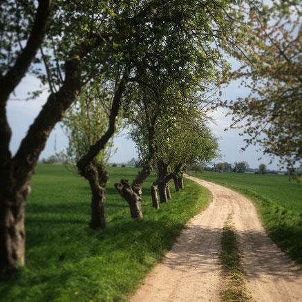 (c) Heike Dahl Oderbruch Feldweg mit Obstbäumen