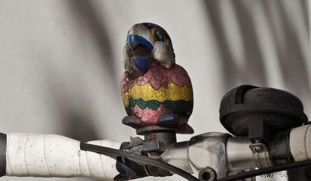 bunte Vögel fliegen immer noch im Prenzlauer Berg herum