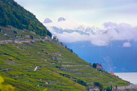 Lausanne top things to do - Lavaux Vineyards - Copyright  Kosala Bandara