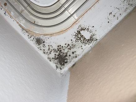 Intensiver Schimmel an einer oberen Ecke eines Wohnzimmers