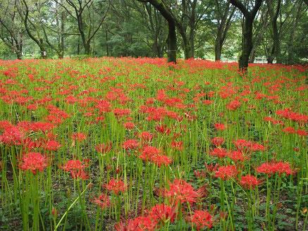 ●野川公園・自然観察園にて