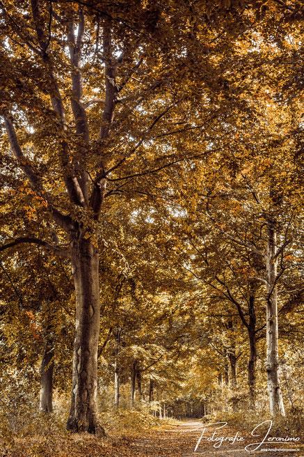 Landgoed Visdonk in Roosendaal (Brabant) op een mooie herfstdag