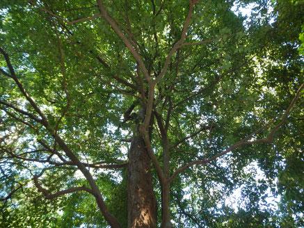 森林再生コンサルティング