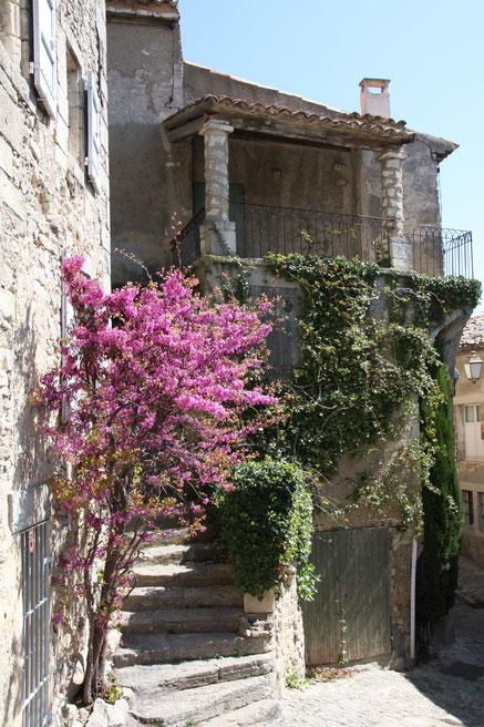 Bild: Frühling in Bonnieux