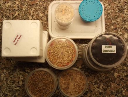 Online lebende Futtertiere, Insekten und Angelköder bestellen. Begleitbild Lebendköder zum Angeln in Verbraucherpackungen.