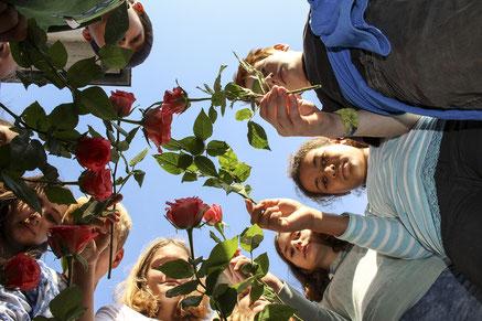 Rosen für die Opfer der Nationalsozialisten legen die Jugendlichen an Stolpersteinen nieder.