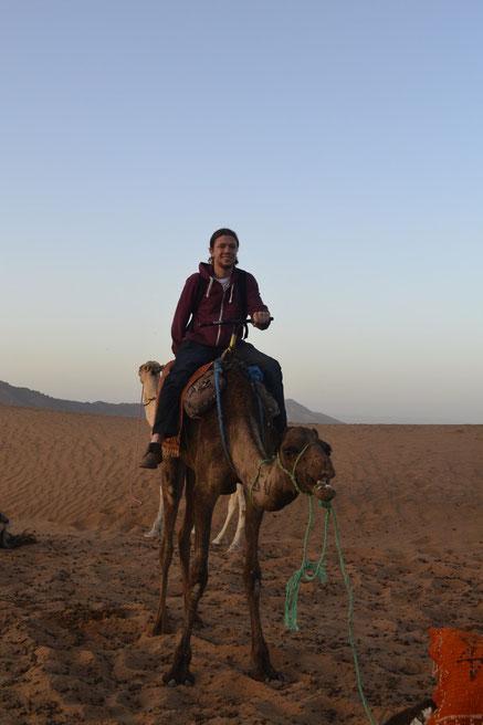 Zwei Kamele auf einem Foto...
