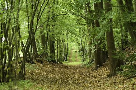 Forêt de Roumare, Le Genetey, sentier qu'empruntait fréquemment Louis Fabulet