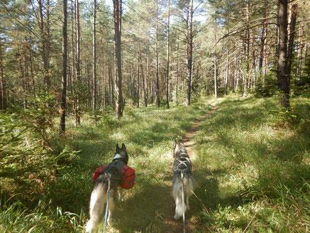 Jurasteig Dogtrekking Dogtrekking Dogtrekking Elbsandstein-Dogtrekking ESDT Harz-Dogtrekking