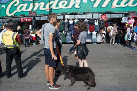Hund vor dem Camden Market, London