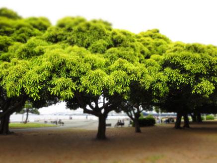 山下公園      木々の緑と目の前に広がる海 心地よい場所です