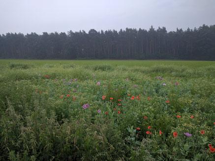 Natuurgebied Het Leudal voor gevarieerd wandelen en fietsen