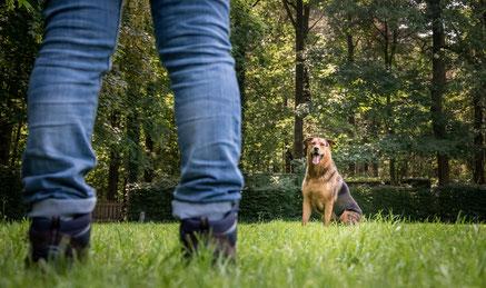 hondentraining Hondenschool De Lijn