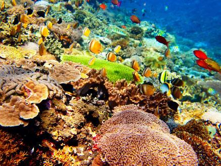 Kleurrijke onderwaterwereld voor de kust van Bali Indonesie