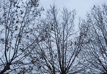 25. November 2016 - Die letzten Blätter fallen