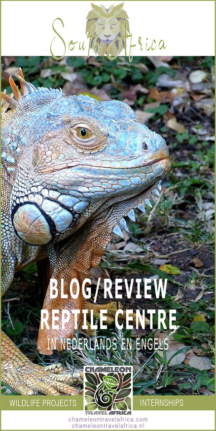 Reptielen blog review Chameleon Travel Zuid-Afrika