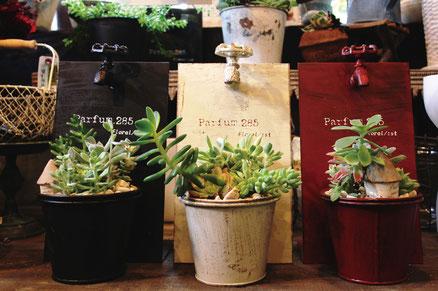 多肉植物寄せ植え一例