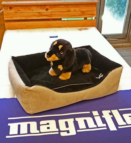 ペット専用ベッド / イタリア製マニフレックス
