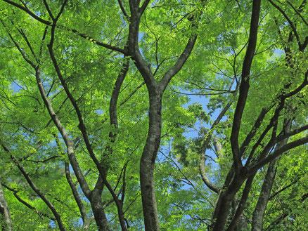 福岡市西公園の新緑