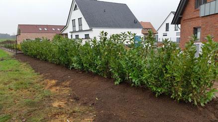 Gartenpflege, Gartengestaltung, Heckenpflanzung in Hannover, Burgwede