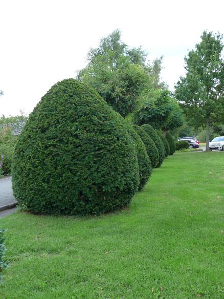 Heckenschnitt, Formschnitt - Gartenpflege von GreenFairway e.K.